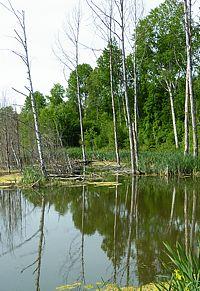 Skog Mälarstrand